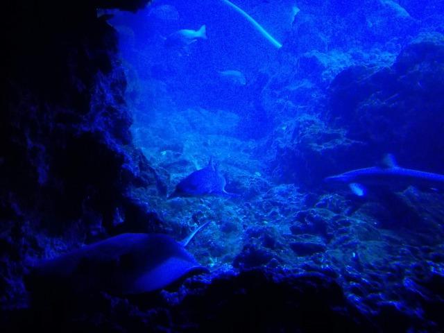 サメの洞窟